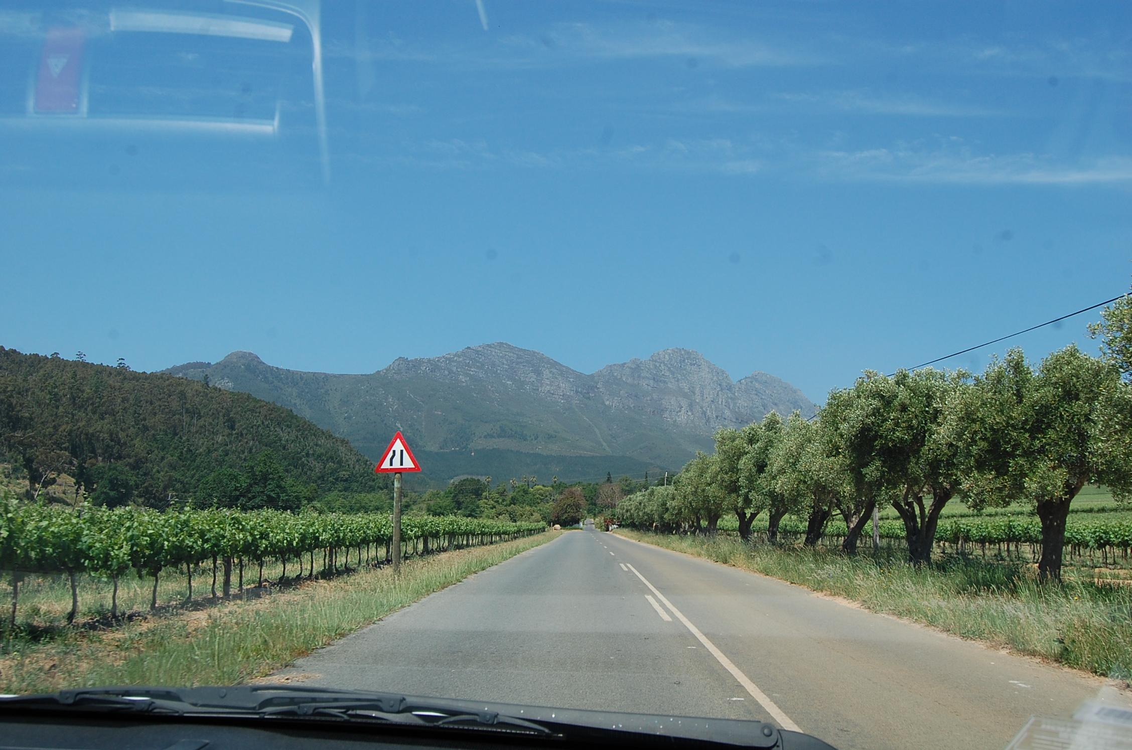 На автомобиле по ЮАР.  Виноградники в Стелленбоше.